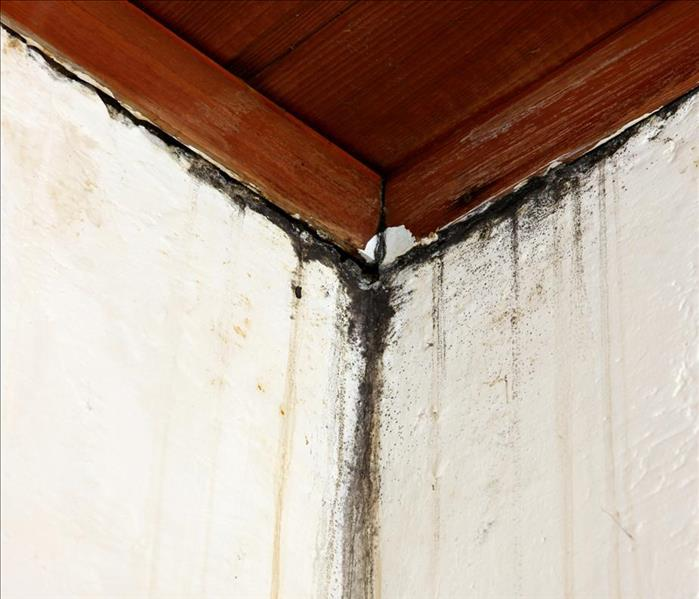 Mold Remediation Mold Remediation -- Not A DIY Endeavor