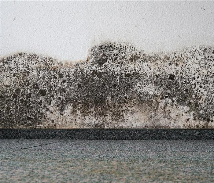 Mold Remediation Ice Dams And Frozen Pipes Can Be A Cause Of Mold Damage In Elkhorn