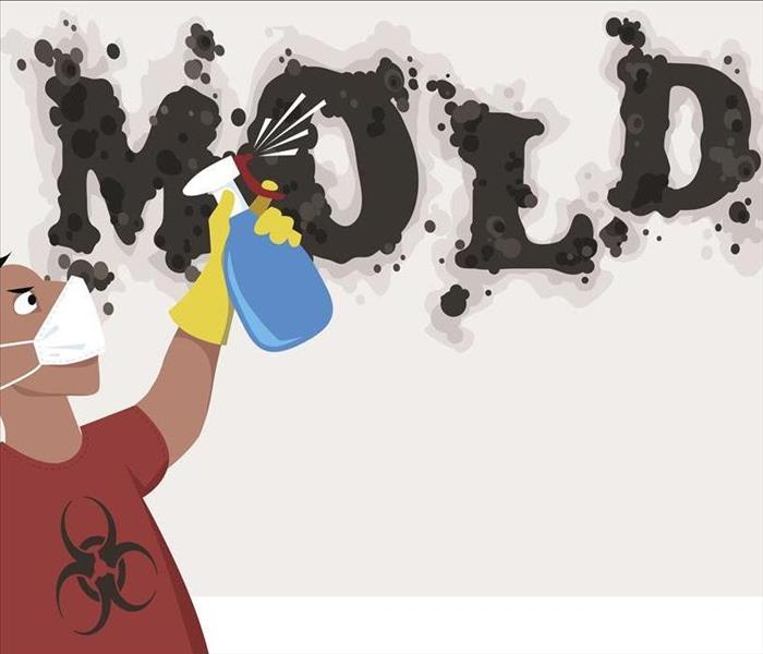 Mold Remediation Clearing The Mold Damage From Your Elkhorn Home