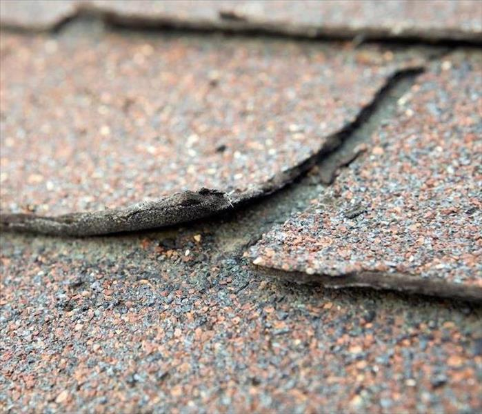Mold Remediation Roof Wearing can Lead to Mold Damage in Your Elkhorn Home